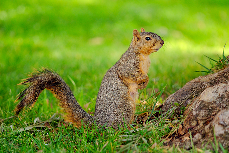Squirrel_0472