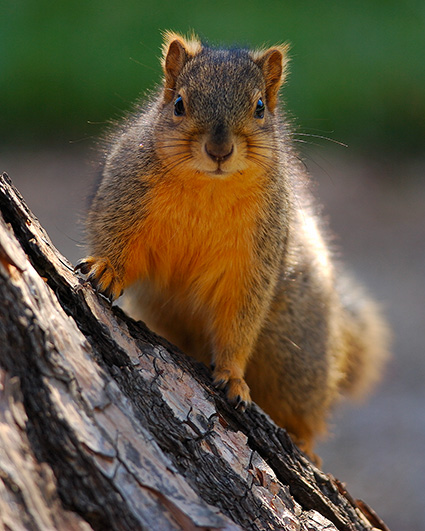 Squirrel_9326