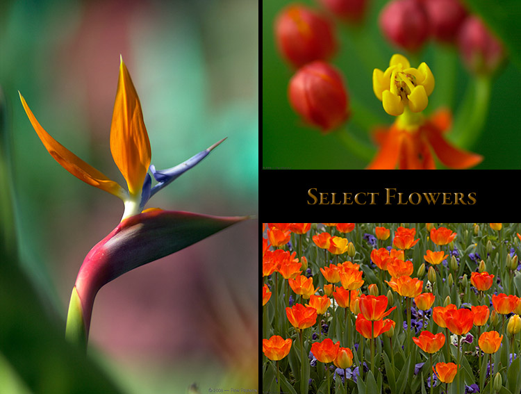 Flowers_Select