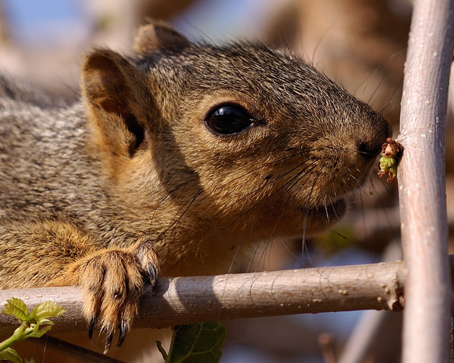 Squirrel_HS0561