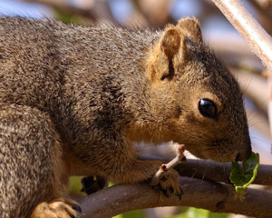 Squirrel_HS0576
