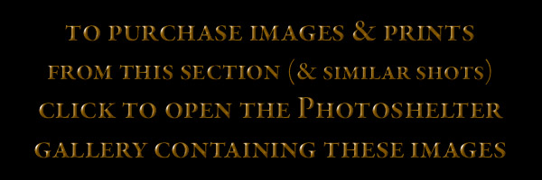 PhotoshelterGallerySection