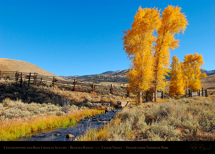 RoseCreek_Cottonwoods_LamarValley_0504
