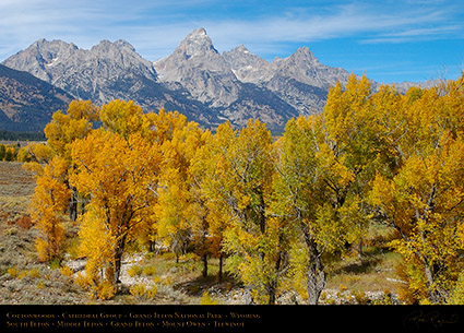 Cottonwoods_CathedralGroup_GrandTetons_1062