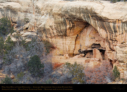 Mesa_Verde_Oak_Tree_House_X9711