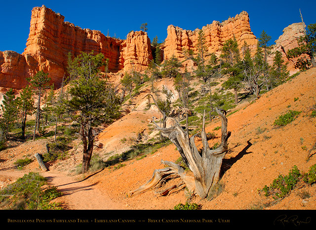 Bryce_Canyon_Fairyland_Trail_X1812