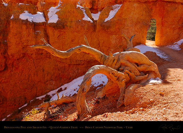 Bryce_Canyon_Queens_Garden_Arch_5340