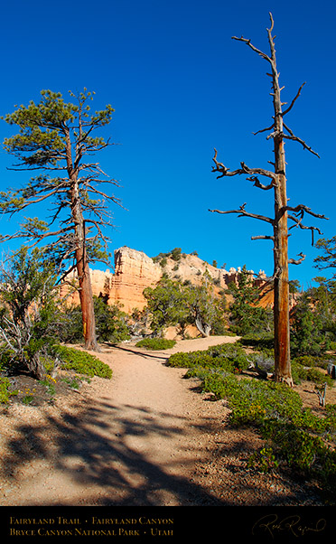 Bryce_Canyon_Fairyland_Trail_X1844