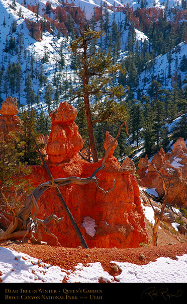 Bryce_Canyon_Dead_Tree_Queens_Garden_5323
