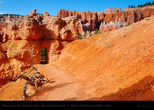 Bryce_Canyon_Queens_Garden_Arch_5617