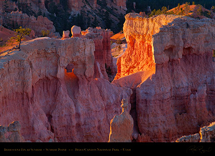 Bryce_Canyon_Iridescent_Fin_at_Sunrise_X1926