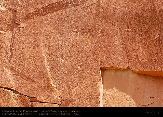Fremont_Bighorn_Sheep_Capitol_Reef_5855