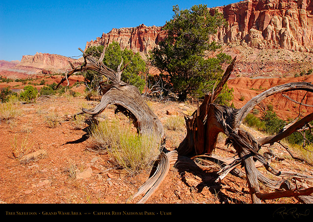 Tree_Skeleton_Capitol_Reef_1444