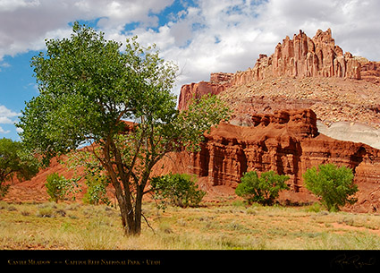Castle_Meadow_Capitol_Reef_7134