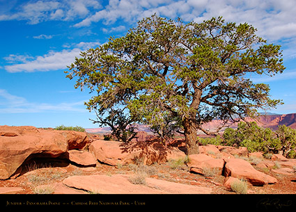 Juniper_Panorama_Point_Capitol_Reef_5789