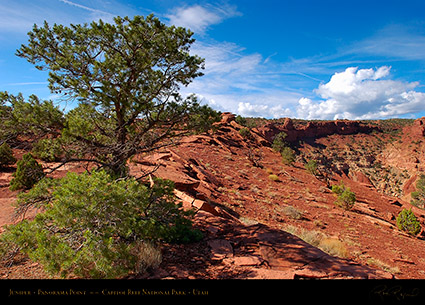 Juniper_Panorama_Point_Capitol_Reef_5812