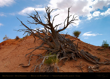 Devils_Garden_Tree_Skeleton_7071