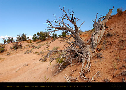 Devils_Garden_Tree_Skeleton_7073