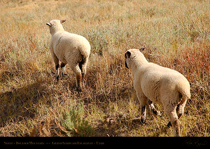 Sheep_Boulder_Mountain_0414