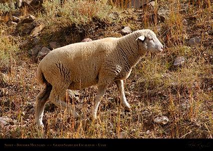 Sheep_Boulder_Mountain_0417