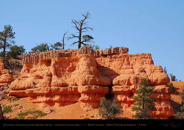 Red_Canyon_Junipers_Arches_Trail_0732
