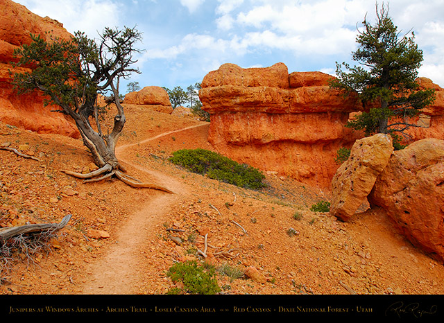 Red_Canyon_Junipers_Windows_Arches_Trail_X2341