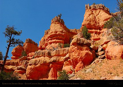 Red_Canyon_Ledges_Arches_Trail_0704