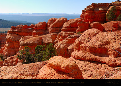Red_Canyon_Ledges_Arches_Trail_0705