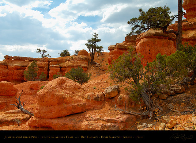 Red_Canyon_Ledges_Arches_Trail_X2305