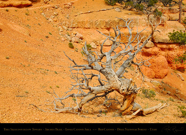 Red_Canyon_Tree_Skeleton_Arches_Trail_X2320