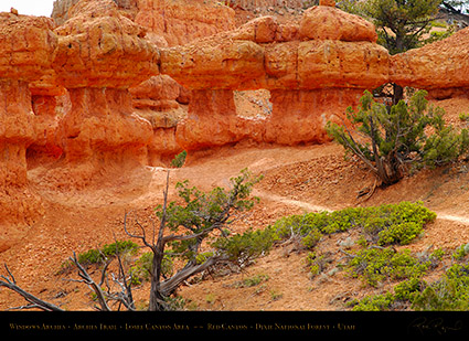 Red_Canyon_Windows_Arches_Trail_X2349