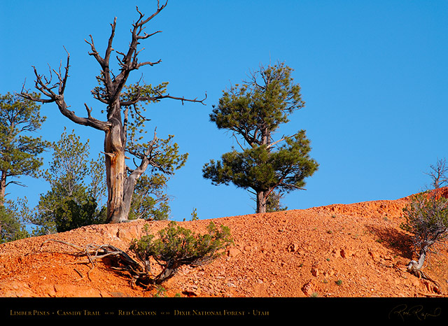 Red_Canyon_Limber_Pines_Cassidy_Trail_X2172