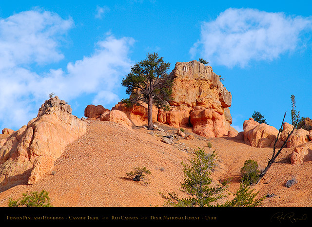 Red_Canyon_Pinyon_Pine_Cassidy_Trail_X2180