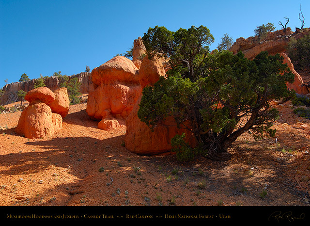 Red_Canyon_Hoodoos_Juniper_Cassidy_Trail_X2243