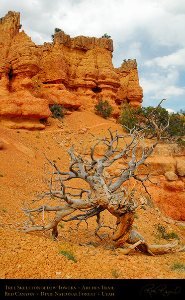 Red_Canyon_Tree_Skeleton_Arches_Trail_X2321