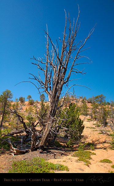 Red_Canyon_Tree_Skeleton_Cassidy_Trail_X2237