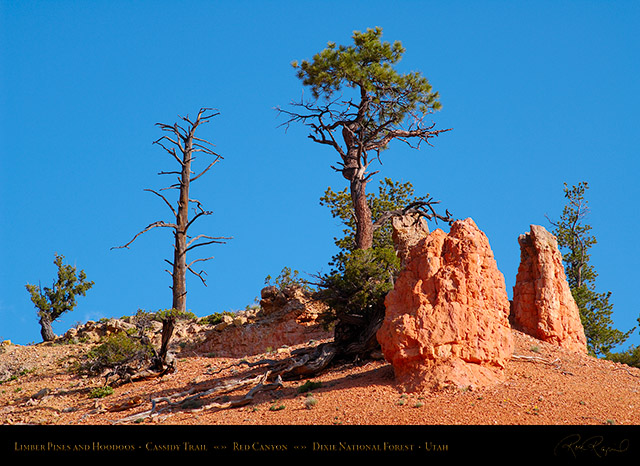Red_Canyon_Limber_Pines_Cassidy_Trail_X2183