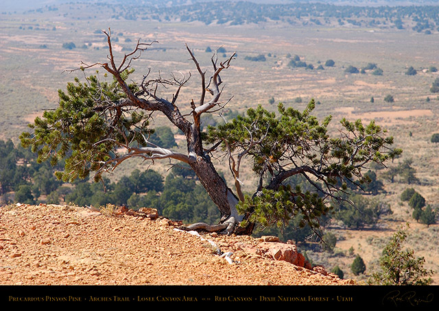 Red_Canyon_Precarious_Pinyon_Pine_Arches_Trail_0761