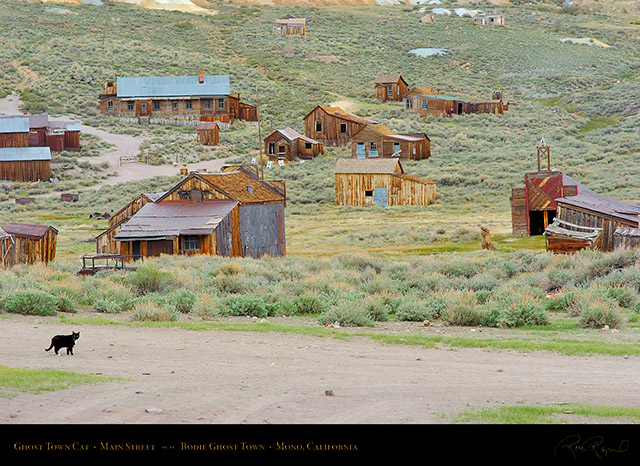 Bodie_Ghost_Town_Cat_3267