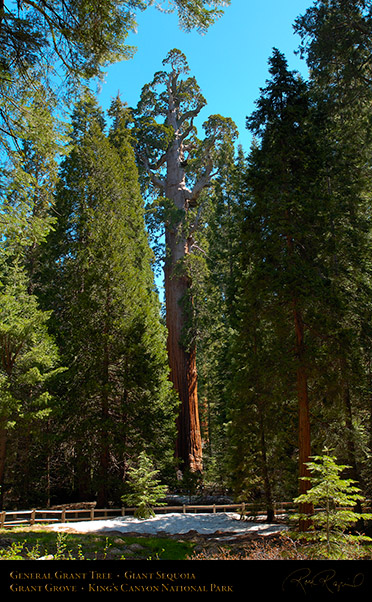 General_Grant_Tree_Kings_Canyon_X0210