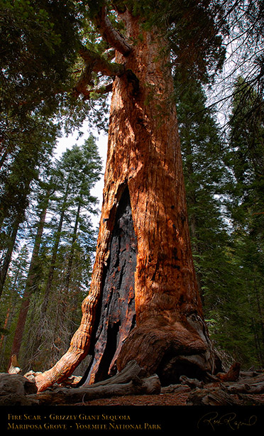 Grizzly_Giant_Sequoia_Fire_Scar_2727