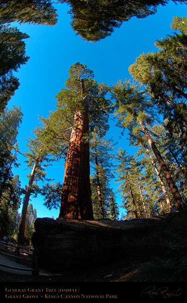 General_Grant_Tree_FE_Kings_Canyon_X6899