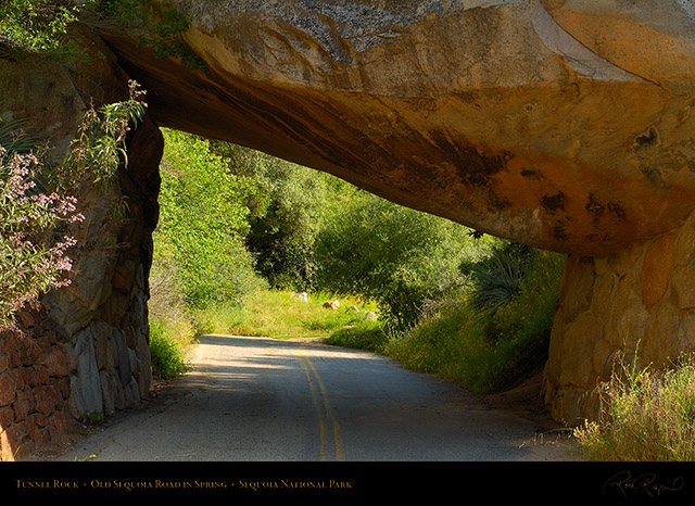 Tunnel_Rock_Old_Sequoia_Road_Spring_X0198