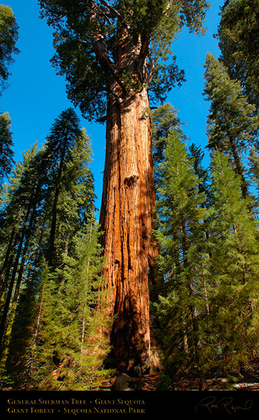General_Sherman_Tree_Sequoia_X0206