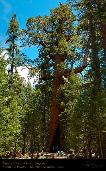 Grizzly_Giant_Sequoia_Mariposa_Grove_X0482