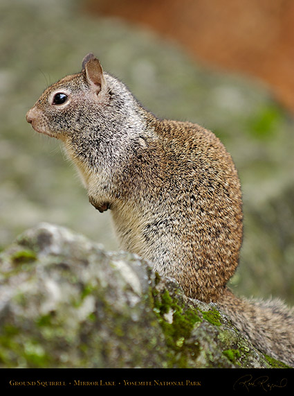Ground_Squirrel_Mirror_Lake_2457