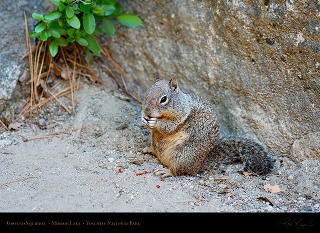 Ground_Squirrel_Mirror_Lake_X2183