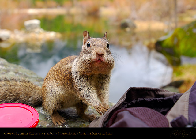 Mirror_Lake_Squirrel_Caught_in_the_Act_2795