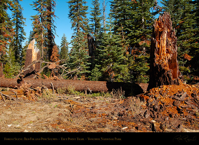 Forest_Scene_Taft_Point_Trail_X6635