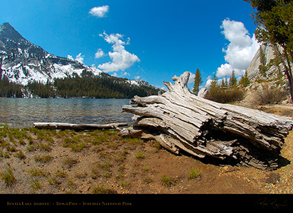 Tenaya_Lake_Tioga_Pass_FE_3184